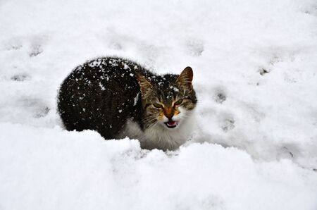 Cat was screaming while it was waiting under snow  Stock Photo - 12603718