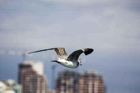 Seagull is flying towards to the city