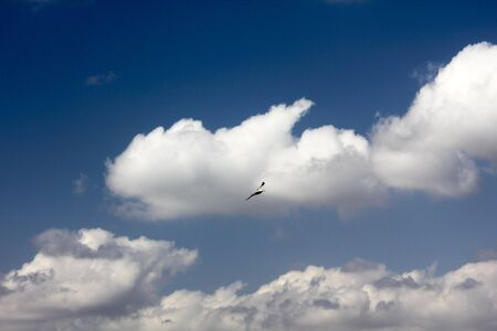 Seagull is flying under white clouds freely  Stock Photo