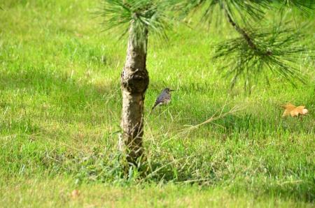 Domestic bird stands in green garden