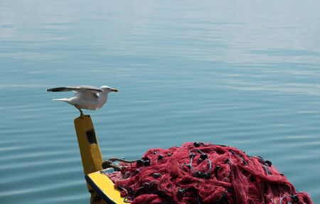 Seagull gets ready to fly from back side of the boat  Stock Photo