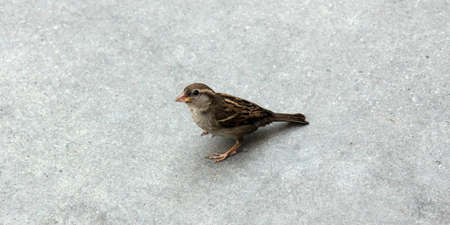 Little sparrow looks around to see what is going on  Stock Photo
