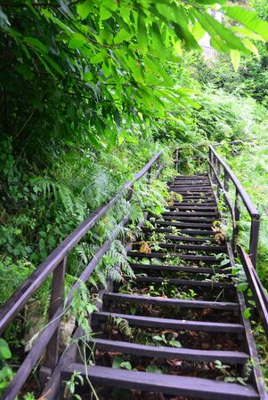 Wooden stairs in the middle of nature to climb up or going down.