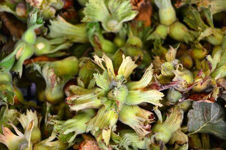 Raw and fresh hazelnuts on grocery shelf. Stock Photo