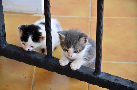 Two stray kittens are waiting.