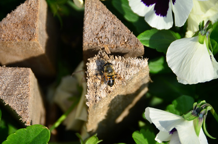 Hover fly stands next to violet flowers. Banco de Imagens