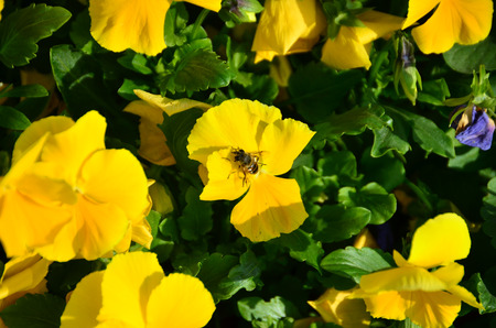 Hoverfly is standing on flower. Stock Photo