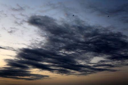 Birds fly towards clouds.