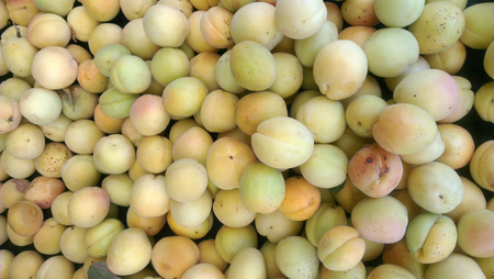 Completely organic apricots are on grocery shelf.