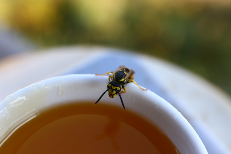 Honey bee collects some jam for producing honey.