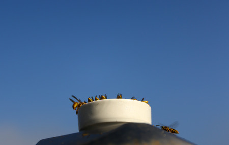 Lots of honey bees stands around honey container to collect some material.