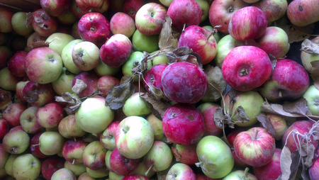 Completely organic apples are on grocery shelf. Banco de Imagens
