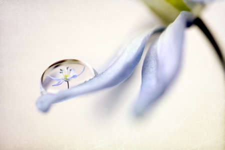Antique grunge textured flower petal with water droplet Stock Photo - 9122201