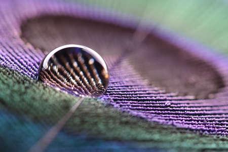 pluma de pavo real: Gota de agua en plumas de pavo real Foto de archivo