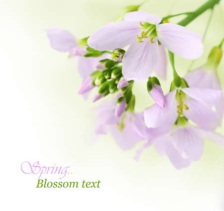 Spring flowers with copy space photo