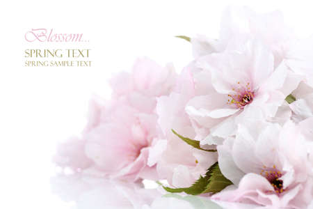 Cherry blossom border with copy space