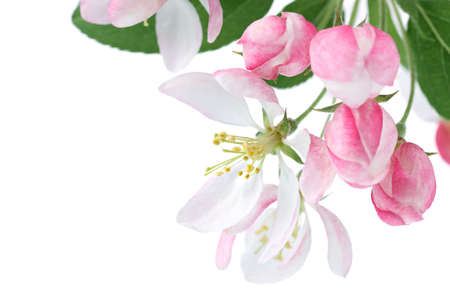 april flowers: Spring blossom with copy space