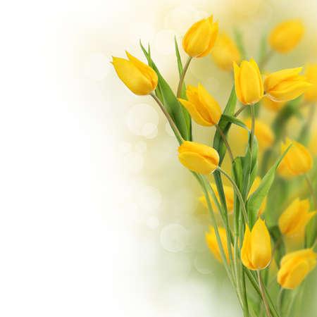 borde de flores: Frontera de flores de tulip�n con espacio de copia