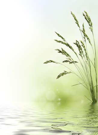 naturaleza: Frontera de grano de trigo con reflexi�n de agua