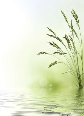 Wheat grain border with water reflection