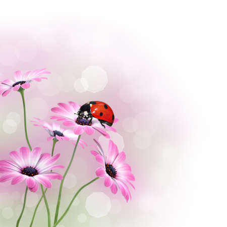 Flowers with ladybird and copy space photo