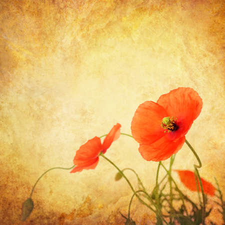 Poppy border on grunge textured background 版權商用圖片