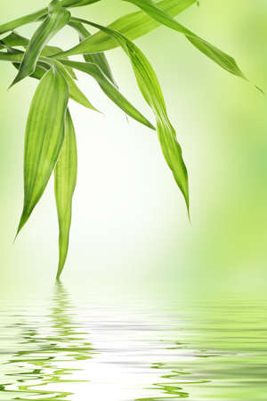 bamboo leaves: Bamboo border with copy space Stock Photo