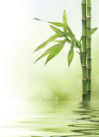 bamboo leaves: Bamboo border Stock Photo