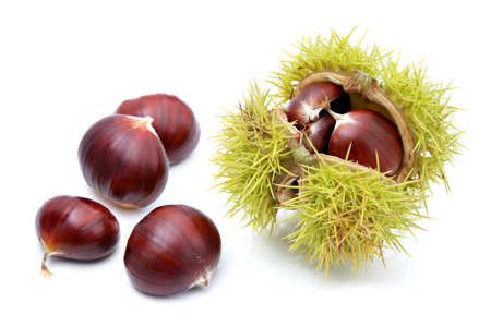 chestnut: Chestnuts in husk