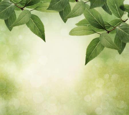 hojas de arbol: Frontera de naturaleza con hojas sobre fondo de textura, estilo vintage