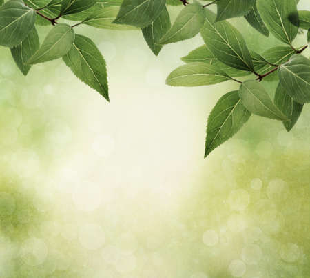 and green leaves: Nature border with leaves on textured background, vintage style Stock Photo