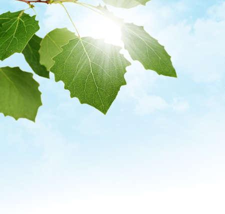 Frontière de printemps avec des feuilles