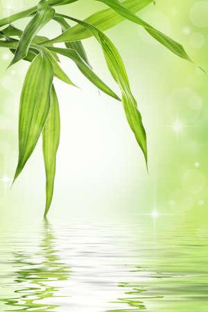 Lucky bamboo design Stock Photo