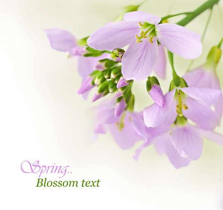 flor violeta: Flores de primavera frontera con copia espacio