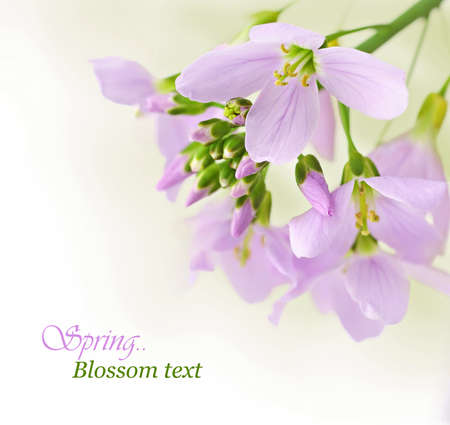 pink flowers: Spring flowers border with copy space