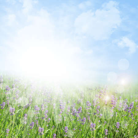 de focus: Abstract spring and summer background with lavender Stock Photo