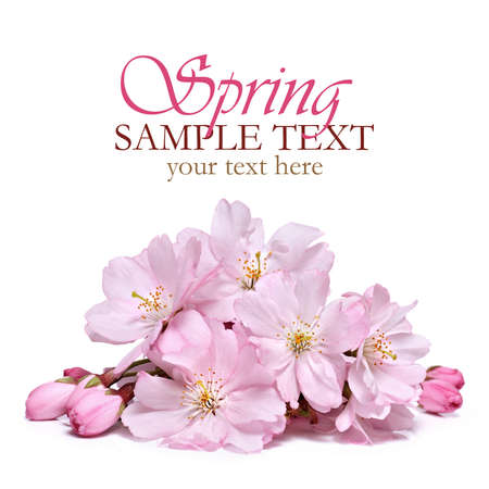 Pink spring flowers Standard-Bild