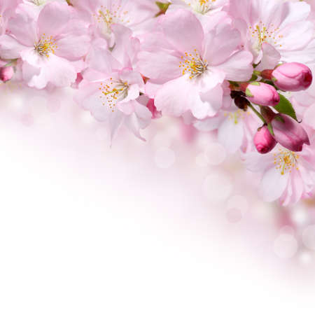 pink flowers: Pink spring flowers design border background