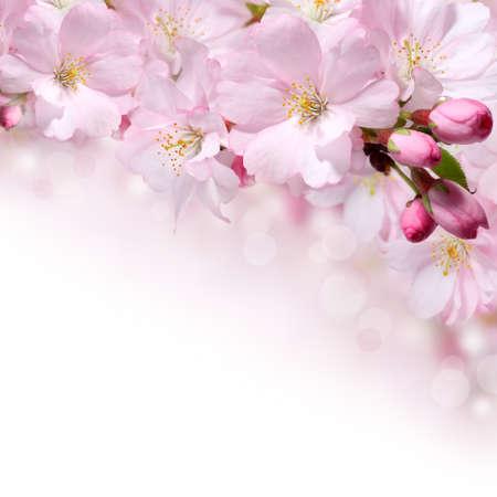 cenefas flores: Primavera de flores de color rosa de fondo diseño de la frontera