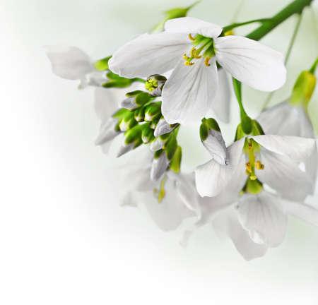 Spring flowers border photo