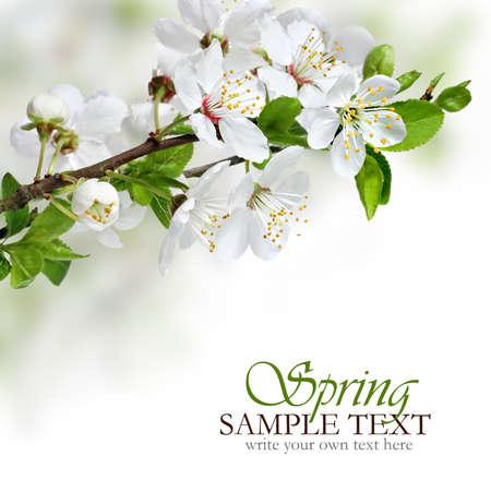 春の花のデザインの境界線の背景
