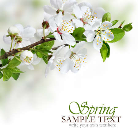 april flowers: Spring flowers design border background
