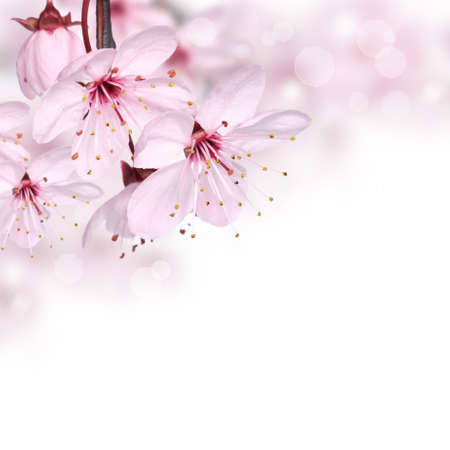 spring flower: Pink spring flowers design border background