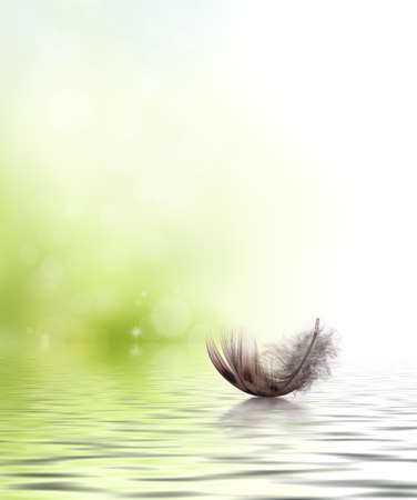Feather drifting on water design