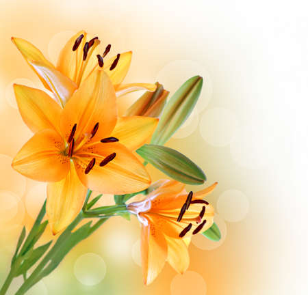 Lelie bloemen rand of achtergrond