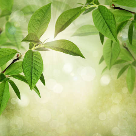 grunge leaf: Summer or spring textured background with green leaves, bokeh and sunlight