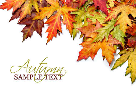 Autumn border with fall leaves Stock Photo