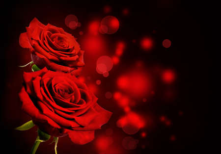 red rose bokeh: Red roses Valentine background