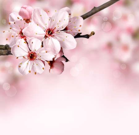 Spring background border with pink blossom Standard-Bild