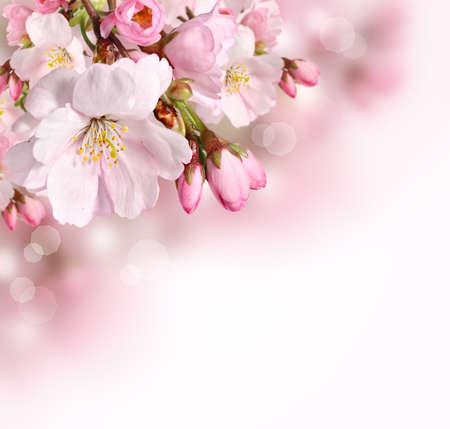 flower border pink: Pink spring blossom border background